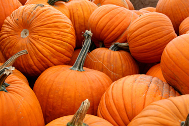 Get Your Pumpkin on at Bucks County's Biggest Pumpkin Festival